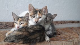 3 cats royalty free stock images