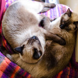 Cats sleeping Stock Photo
