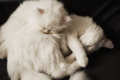 Cats sleeping Royalty Free Stock Photo