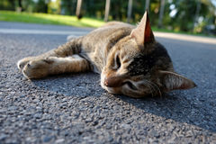 Cats sleeping on the way in garden Royalty Free Stock Images