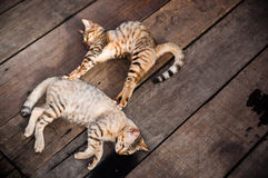 Cats Sleeping on Wooden Floor. Two cats sleeping on wooden floor at an open area Royalty Free Stock Photo