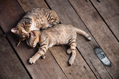 Cats Sleeping on Wooden Floor. Two cats sleeping on wooden floor at an open area Royalty Free Stock Image
