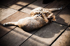 Cats Sleeping on Wooden Floor. Two cats sleeping on wooden floor at an open area Royalty Free Stock Images