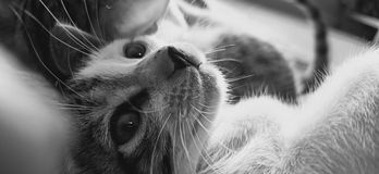 Cats smarter than dogs royalty free stock image