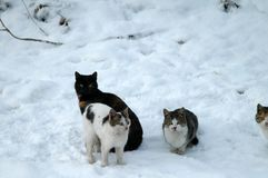 Cats on the snow 2. Landscape stories in the winter season on the Borcea arm Stock Photo
