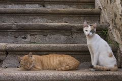 Cats on the stairs. Two cats on old stairs Royalty Free Stock Photo