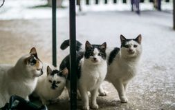 Cats staying on the floor. Cats staying on the snowy floor Royalty Free Stock Photo