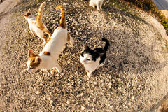 Cats on the street Royalty Free Stock Photo