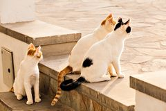 Cats on the street Royalty Free Stock Photos