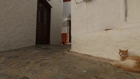 Cats on the street of the old town on Greek island. stock video footage