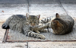 Cats on Street Stock Photography