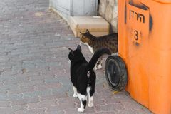 Cats on a street in Tel Aviv. stock photos