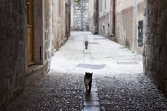 Cats in the streets of Dubrovnik Stock Image