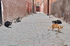 Cats on the streets of Marrakech, Morocco Royalty Free Stock Image
