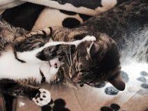 Cats struggling Stock Photos