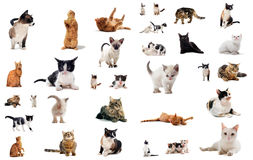 Cats in studio royalty free stock photo