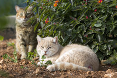 Cats in the sun Royalty Free Stock Images