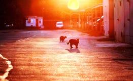 Cats in the Sun on Odessa, Ukraine Stock Photography