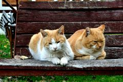 Cats on swing Stock Photography