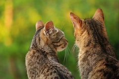 Cats talking. Two cats enjoying a beautiful day Royalty Free Stock Photos