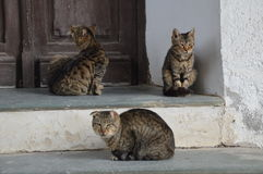 Cats. Three cats, maybe they are friends Royalty Free Stock Photo