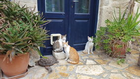 Cats. Three cats waiting in the front door of a house Royalty Free Stock Photography