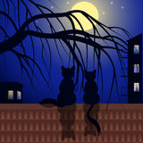 Cats on tiled roof Stock Photo