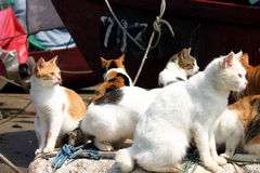 Cats together. Ctas gathering together Stock Image