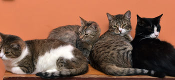Cats together on the mat at the animal shelter Stock Images