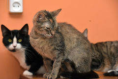 Cats together on the mat at the animal shelter Stock Image
