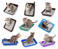 Cats top view sitting in litter box set isolated. Cats top view sitting in litter box isolated on white collection Royalty Free Stock Photo