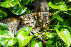 Cats on tree Stock Photography