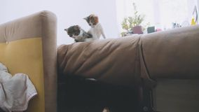 The cats is trying to get off the couch slow motion video. kittens playing concept two kitten lifestyle and a cat. The cats is trying to get off couch slow stock video
