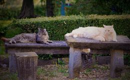 Cats in Tuscany Royalty Free Stock Image