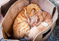 Cats Royalty Free Stock Images