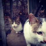 Cats. Two domestic cats sitting in a yard Stock Photo
