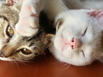 Cat's. Two cats friends Royalty Free Stock Photos