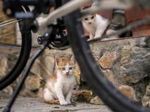 Cats. Two kittens, brother and sister near a bycicle Stock Photos