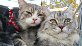 Cats. Two cats lay aside the daytime Royalty Free Stock Photography