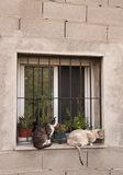 Cats. Uploaded image of two cats in a window Stock Photos