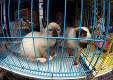 Cats Stock Photo