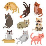 9 cats. vector characters collection. Vector characters. 9 cats. animals collection Royalty Free Stock Photos