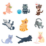 Cats vector set. Royalty Free Stock Photo