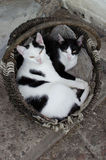 Cats. Village funny cats in a basket Royalty Free Stock Photos