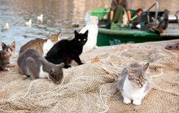 Cats waiting for fishermen. Stock Photography