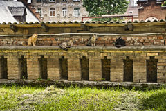 Cats on a wall. Four cats are sitting on an old wall, made of bricks stock images