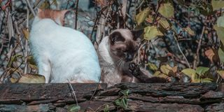 Cats in the wall wasting time. Two cats taken sun on a stone wall in a quiet actitude Royalty Free Stock Photos