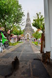 Cats at Wat Arun. Bangkok. Thailand Royalty Free Stock Photos