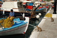 Cats watching fishermen corrects fishing net Stock Images