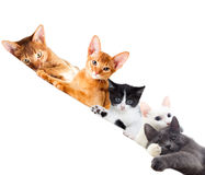 Cats watching Royalty Free Stock Photo